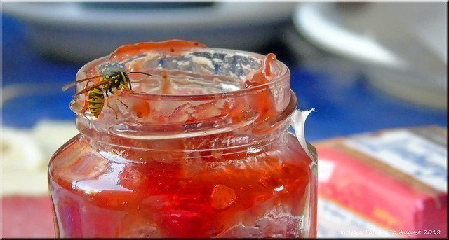 HANDIGE KAMPEERTIPS  Wespen verjagen en bestrijden! 19 tips tegen wespen, de beste anti wespen tips