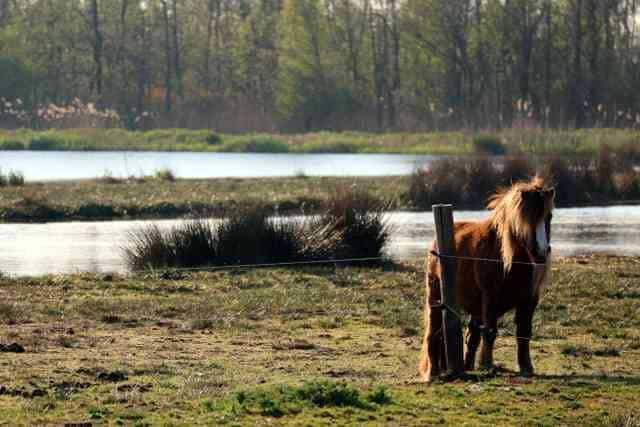 CAMPINGS NEDERLAND  Campingtip: De Reidplûm, kamperen tussen de ooievaarsnesten op