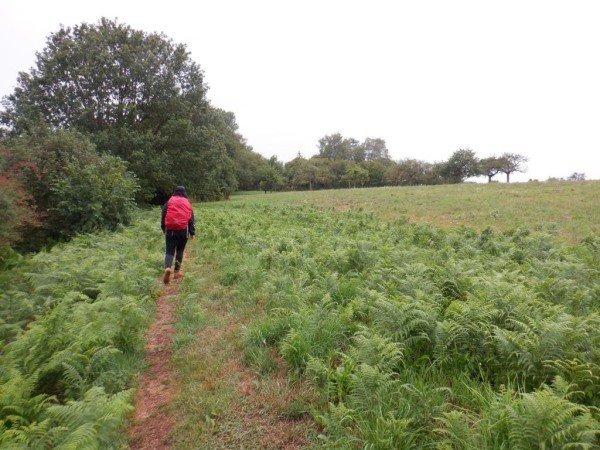 Wandelen door de velden op de Bergener