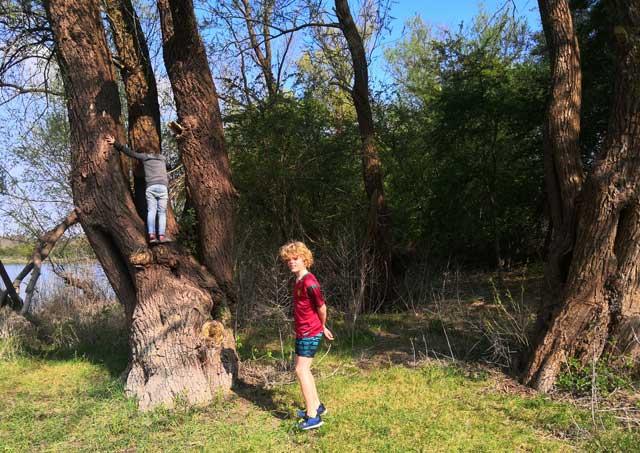 bomen klimmen