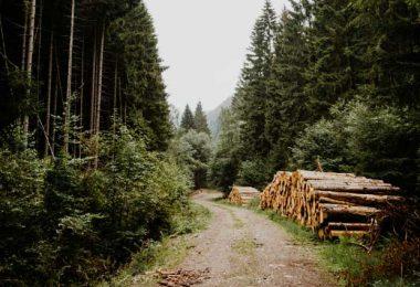 harz camper route