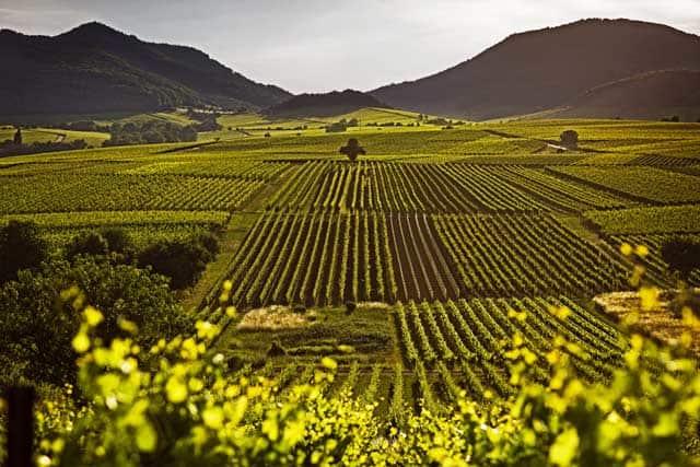 wijngaarden camperroute duitsland